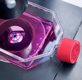 Cell Biology Assays